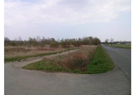 Działka na sprzedaż - Gm. Krapkowice, Krapkowicki, 40 200 m², 4 824 000 PLN, NET-318250162