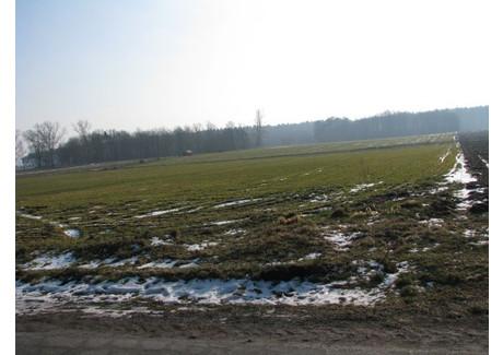 Działka na sprzedaż - Świebodzin, Świebodziński, 11 000 m², 330 000 PLN, NET-3323