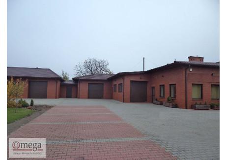 Magazyn na sprzedaż - Glinki, Biała Podlaska, Biała Podlaska M., 400 m², 1 450 000 PLN, NET-OMW-HS-3537