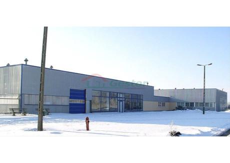 Magazyn na sprzedaż - Brzeg, Brzeski, 2175 m², 3 700 000 PLN, NET-24/2261/OOS