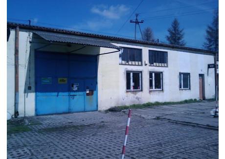 Magazyn, hala do wynajęcia - Waryńskiego Brzeziny, Brzeziński (pow.), 600 m², 3600 PLN, NET-4