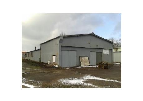 Komercyjne do wynajęcia - Przemysłowa, Nowa Sól, Nowosolski, 820 m², 8000 PLN, NET-WMag-RE53-669-33020