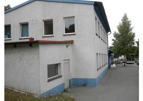 Magazyn do wynajęcia - Świebodzin, Świebodziński, 600 m², 6000 PLN, NET-74/1850/OOW