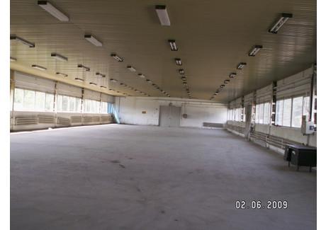 Magazyn do wynajęcia - Zielona Góra, 1300 m², 14 300 PLN, NET-41/1850/OOW