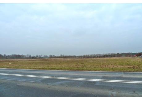 Działka na sprzedaż - Bolemin, Deszczno, Gorzowski, 7492 m², 599 360 PLN, NET-96/1864/OGS