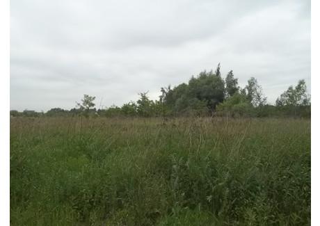 Działka na sprzedaż - Domaszczyn, Długołęka, Wrocławski, 18 000 m², 3 240 000 PLN, NET-16733