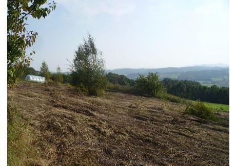 Działka na sprzedaż - Winiary, 5500 m², 330 000 PLN, NET-2695/B