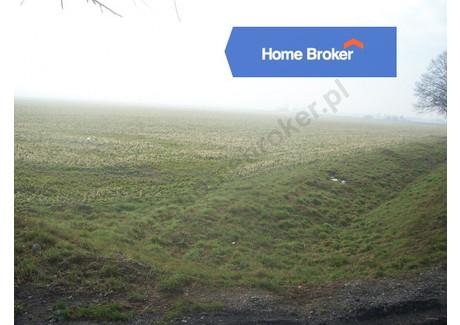 Działka na sprzedaż - Lasocice, 3012 m², 361 440 PLN, NET-204738