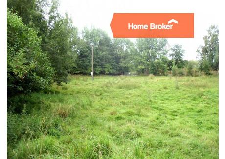Działka na sprzedaż - Niekłonice, 3100 m², 230 000 PLN, NET-237319