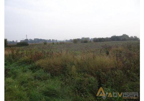 Działka na sprzedaż - Bieniewo-Parcela, Błonie, Warszawski Zachodni, 10 000 m², 500 000 PLN, NET-ADV-GS-20617-50