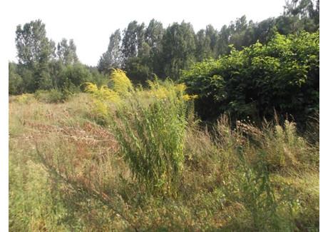Działka na sprzedaż - Sulęcin, 15 540 m², 1 243 200 PLN, NET-LU0253