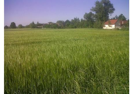 Działka na sprzedaż - Niewodniki, Dąbrowa, Opolski, 1350 m², 75 000 PLN, NET-35