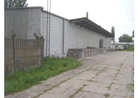Fabryka, zakład do wynajęcia - Opole, Opole M., 400 m², 5000 PLN, NET-ZUR-BW-1018