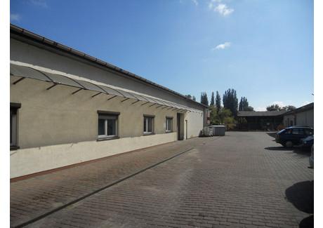 Komercyjne do wynajęcia - Szczecin, 820 m², 14 760 PLN, NET-SCN20669