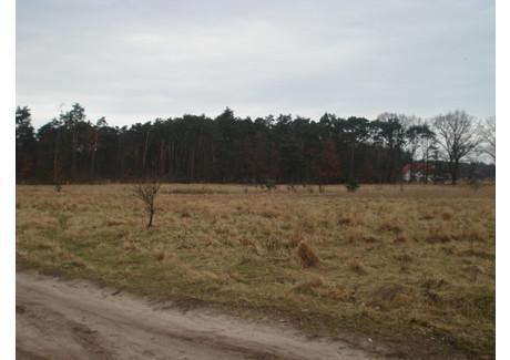 Działka na sprzedaż - Kościno, Dobra (szczecińska), Policki, 4517 m², 316 190 PLN, NET-SCN20878