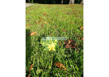 Działka na sprzedaż - Łazy, Lesznowola, Piaseczyński, 1200 m², 430 000 PLN, NET-17906