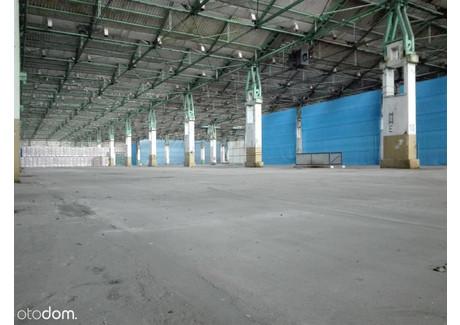 Hala do wynajęcia - Oława, Oławski, 7000 m², 70 000 PLN, NET-3629830749