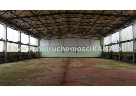 Magazyn do wynajęcia - Bielsko-Biała, Bielsko-Biała M., 1300 m², 20 000 PLN, NET-NBK-HW-1825