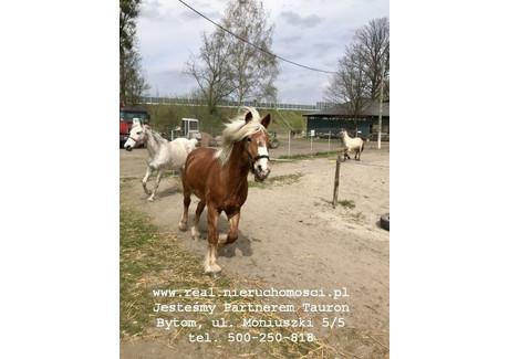 Dom na sprzedaż - Bytom, 200 m², 1 500 000 PLN, NET-Dom__w_Bytomiu_+_konie